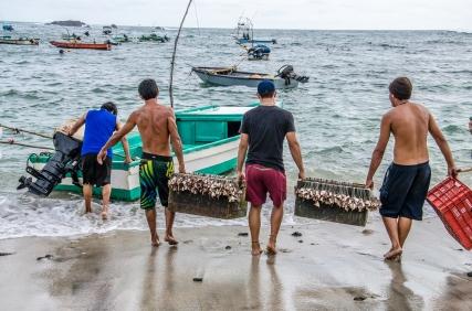 Esto es verdadera pesca artesanal. Cuantos tiburones martillos adultos caben en esa panga?