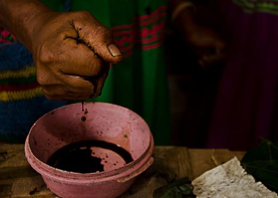 """La mano curtida exprime el pigmento de las hojas del """"árbol negro"""""""
