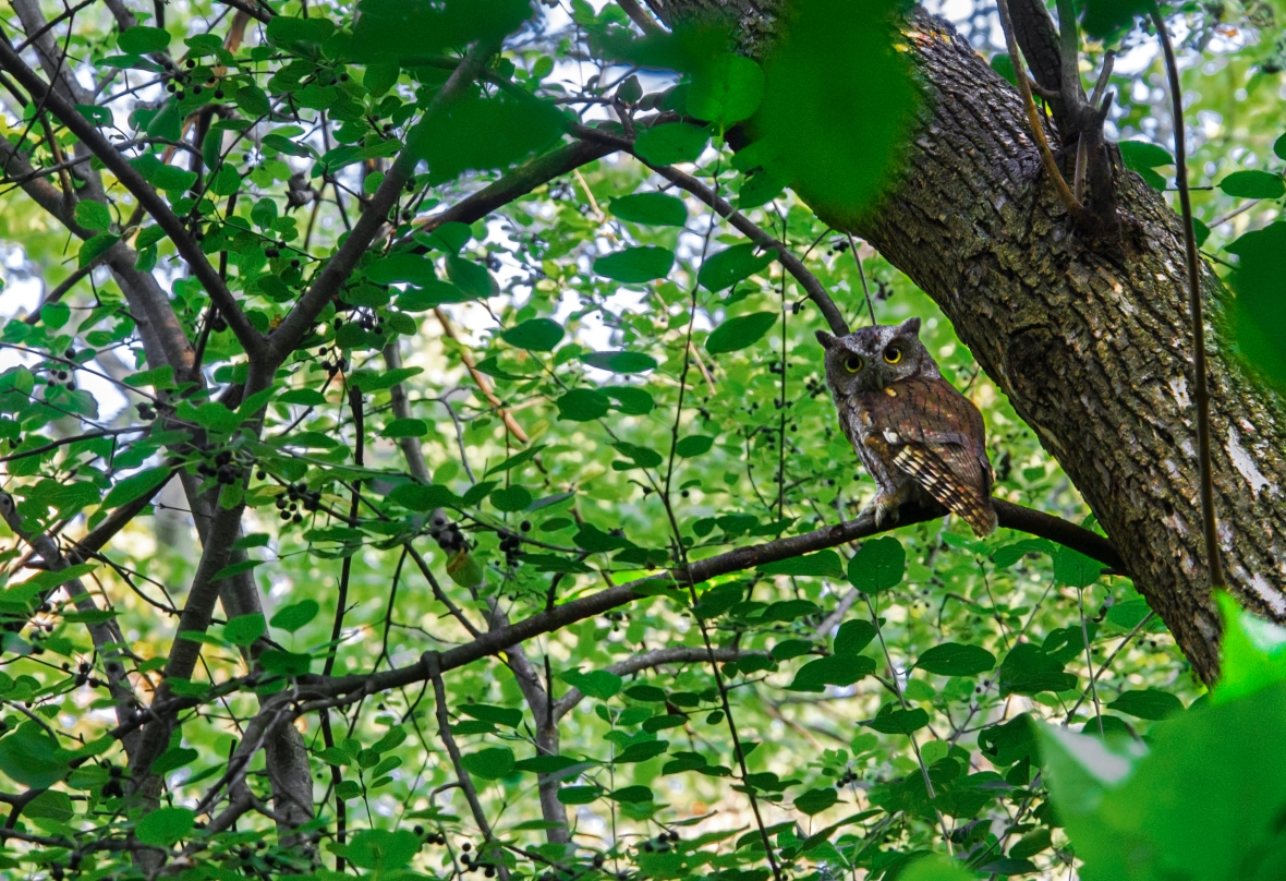 An owl standing on a branch next to a tree trunk, foliage on the background